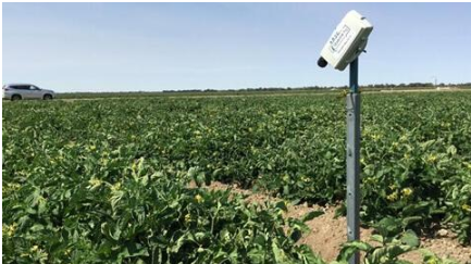 Australia has developed a new agricultural sensor to predict crop water consumption